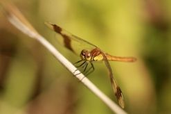 IMG_3447 a